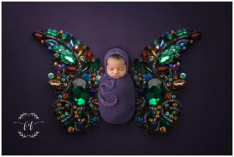 Olympia Newborn Studio Photographer